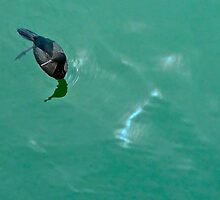Sea Bird In Pillar Point Harbor  by Scott Johnson