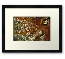 Watchful Framed Print