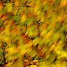 Autumn colors blown by the wind by Patrick Morand