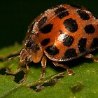 Ladybird by Shelley Warbrooke