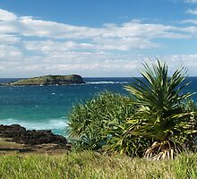 Pandanus at Fingal Head by Igor Makunin