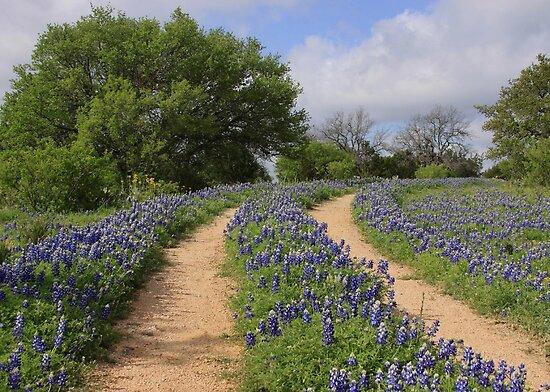 Bluebonnet Trail by Robert Armendariz