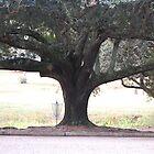 Solitary Oak by zpawpaw