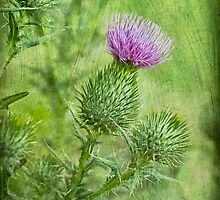 Thistle by Rosemary Scott