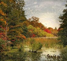 Autumn  at the Wetlands by Jessica Jenney