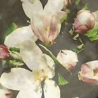apple blossoms on moon by Leeanne Middleton