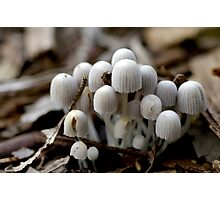 Coprinus Disseminatus Photographic Print