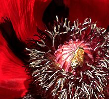 Bee well red by Bernie Garland