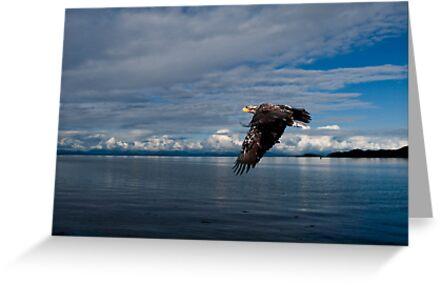 Fly By by Gail Bridger