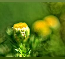 Pineapple Weed by OneRudeDawg
