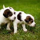 Puppies by Tamara Brandy