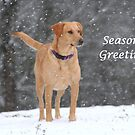 Season&#x27;s Greetings by DebbieCHayes