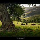On  Carnbanmor by Dohmnuill