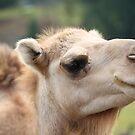 Camel by Roger Coelho