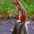 Chipmunk profile by Molly  Kinsey