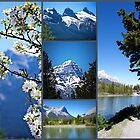 Canmore, Alberta by Lisa Knechtel