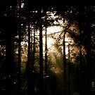 The Fading Light by Richard Pitman