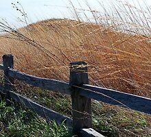 Fence along the Prairie by Brian Gaynor