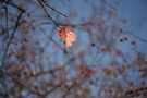 Ready to fall by Brenden Bencharski