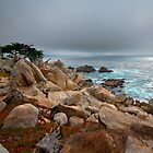 17 Mile Drive by Kerri Gallagher