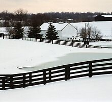 Snowy Day - Richwood Farm by Shannon Guest