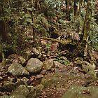 Wollumbin Rain Forest by Mo Davies