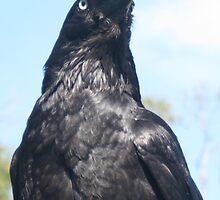 Crow Elegance by GemmaWiseman
