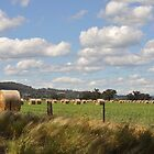 Hay bales by julie anne  grattan