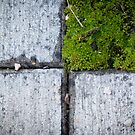 Natural Square by Rhys Herbert