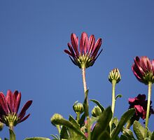 Reaching for the Sky by Don Baker