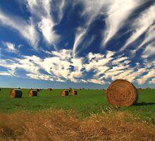 """""""  Prairie Harvest  """" by fortner"""
