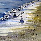 Sandpipers playing in the bubbles at waters edge by loralea