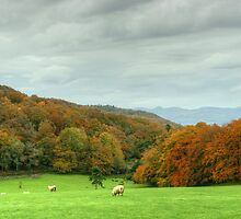 The Colours of Autumn-Finsthwaite Field by VoluntaryRanger