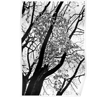 Black & White Tree, with leaves falling. Poster
