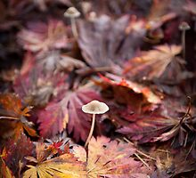 All cozy under a blanket of leaves by Jodi Morgan