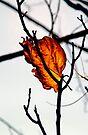 Bright Orange Leaf by Debbie Pinard