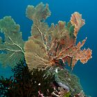 Fan Coral Andaman Sea Thailand by KOKOPEDAL