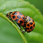 Love Bugs by John  Kowalski