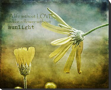 A life without love, is like a flower without sunlight by Edge-of-dreams