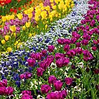 Rainbow of Flowers - Floriade 2010 by -KPW-