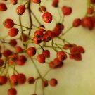 Rose Hips by Priska Wettstein