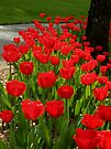 Lets have some Spring TULIPS !!! by AnnDixon