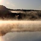 Duck on a Misty Morning - Bonnechere River by Debbie Pinard