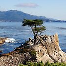 The Lone Cypress by jeanlphotos