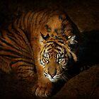 Tiger Cub by zzsuzsa