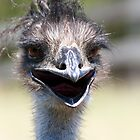 Emu by MichelleRhea