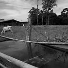 Boat on Dry Land in Costa Rica by Sergey Kahn