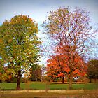 Autumn Trees by Linda Miller Gesualdo
