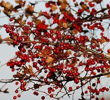 Very Berry by Simon Pattinson