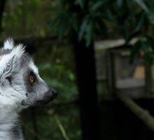 Ring Tailed Lemurs by Ellie Johnston